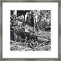Zaire Framed Print