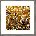 Honey Bees In Hive Framed Print
