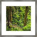 Path In Temperate Rainforest Framed Print