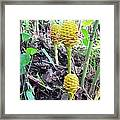 Barriles Flower Framed Print
