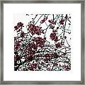 Cherry Blossoms In The Sky Framed Print