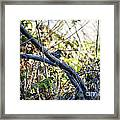 641 Cf Two Branches Framed Print