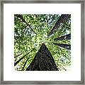 642 Pr A Stand  Of Trees Framed Print