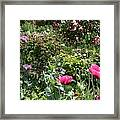 Monets Garden - Giverney - France Framed Print
