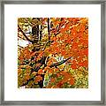 Fall Explosion Of Color Framed Print