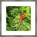 A Bad Day For Mary Poppins Framed Print