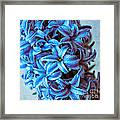 A Beauty In Blue Framed Print by Hannes Cmarits