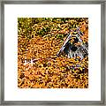 A Bird House Sits Empty In Fall Framed Print