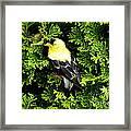 A Bird In The Bush Framed Print