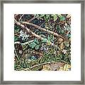 A Birds Nest Among Brambles Framed Print