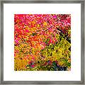 Autumn In Yountville, California Framed Print