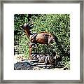 A Buck And His Doe Framed Print
