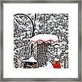 A Cardinal Winter Framed Print