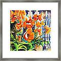 A Choir Of Poppies Framed Print by Kathy Braud