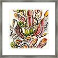 A Collection Of Nepenthaceae Framed Print