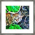 A Curious Cat Framed Print