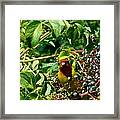 A Day With Mr. Tanager 2 Framed Print