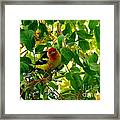 A Day With Mr. Tanager 9 Framed Print