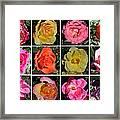 A Dozen Roses Framed Print