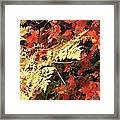A Fall Day In New Hampshire Framed Print