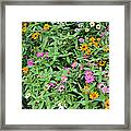 A Field Of Flowers Framed Print