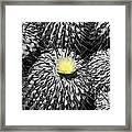 A Flower Among Thorns Framed Print