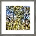 A Forest Glade Framed Print