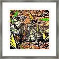 A Kaleidoscope Of Butterflies Framed Print