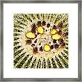 A Mexican Golden Barrel Cactus With Blossoms Framed Print