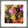 A New Season Blooms Framed Print