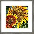 A Pair Of Sunflowers No.1 Framed Print