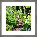 A Path Through An English Bluebell Wood In Early Spring Framed Print