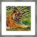 A Real Detroit Tiger Framed Print
