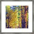 A Shady Drive Through Yosemite Framed Print