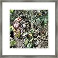 A Sign Of Fall Framed Print