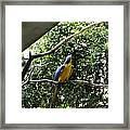 A Single Macaw Bird On A Branch Inside The Jurong Bird Park Framed Print