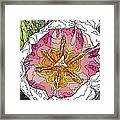 A Tulip To You Framed Print