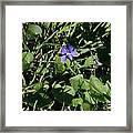 A Violet Framed Print