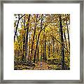 A Walk In The Dune Land Forest Framed Print