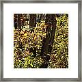 A Walk Through The Woods - 1 Framed Print