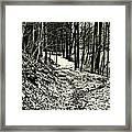 A Winter's Trail Framed Print