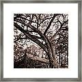 Abandoned House And Grand Oak In Sepia Framed Print