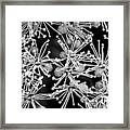 Abstract Blossoms Framed Print