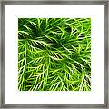 Abstract Of Nature 3 Framed Print