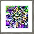 Abstract Passion Flower Framed Print