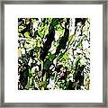 Abstraction Green And White Framed Print