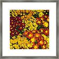 Abundance Of Yellows Reds And Oranges Framed Print
