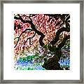 Acer Abstract Framed Print