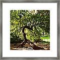 Acrobatic Tree Framed Print
