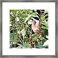 Acrobird Framed Print